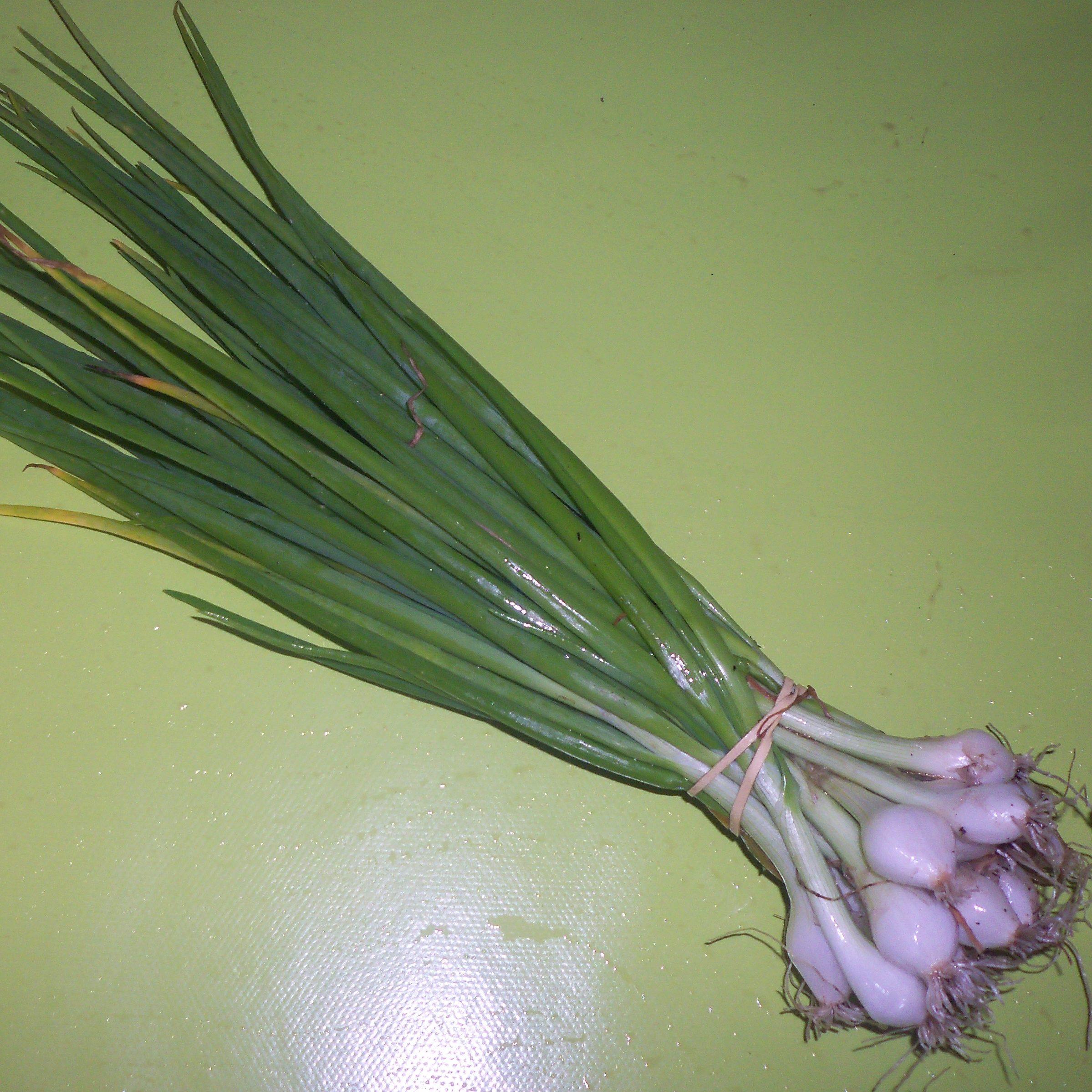 Oignons blancs (botte)