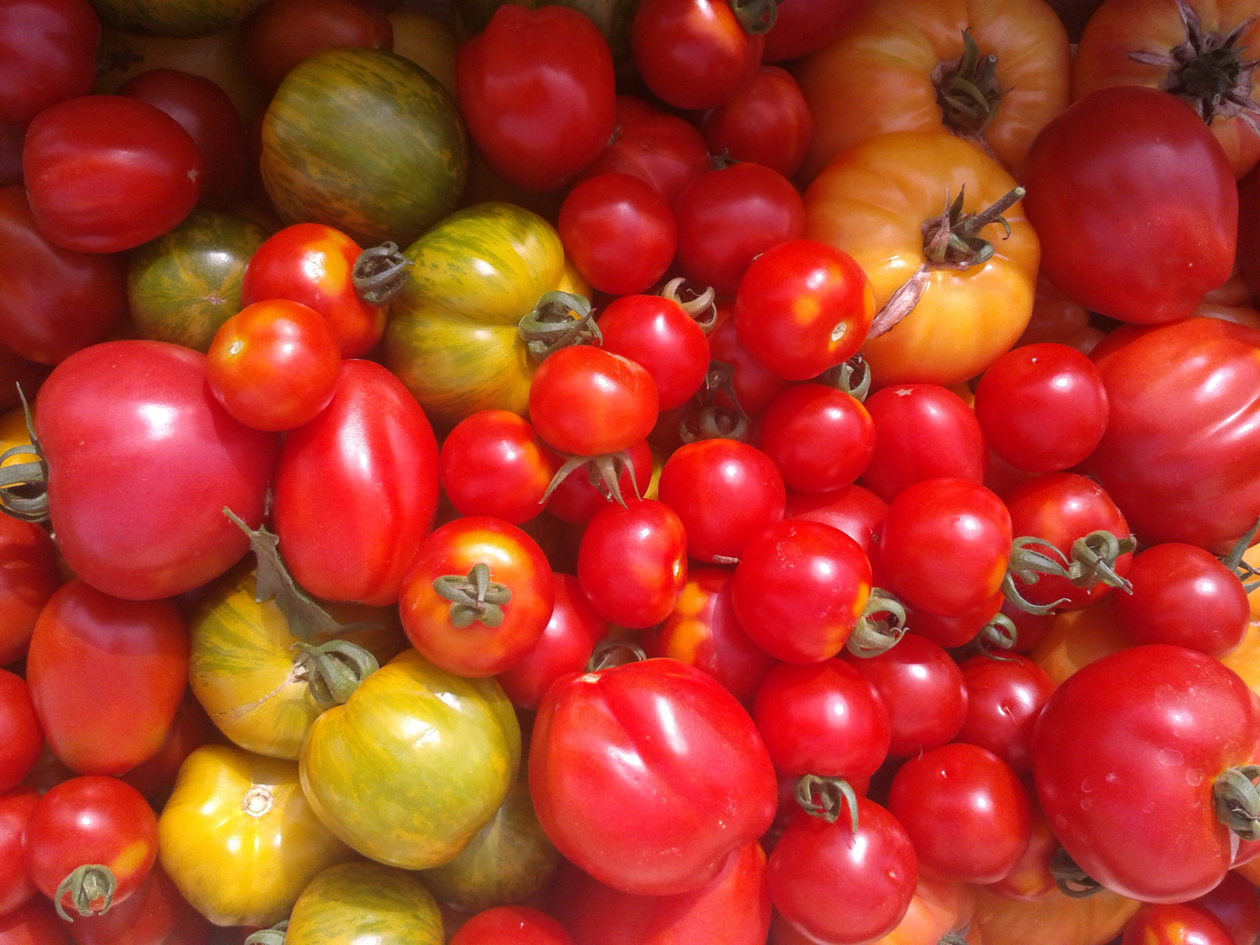 Tomates anciennes (500g)