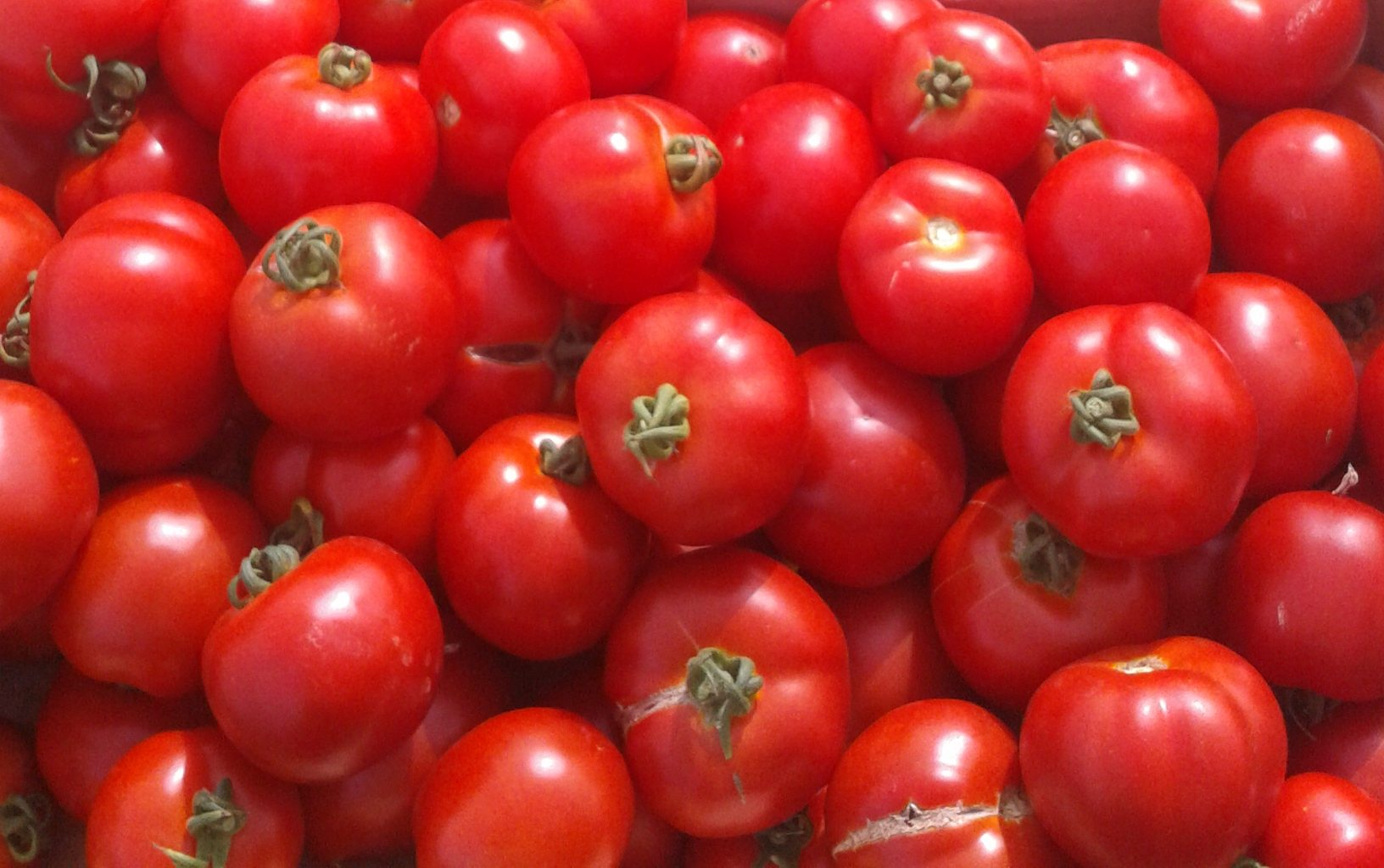 Tomates rondes (500g)